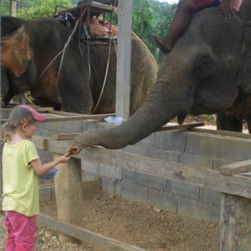 Khao Sok mit Kindern: Ein perfektes Dschungelabenteuer