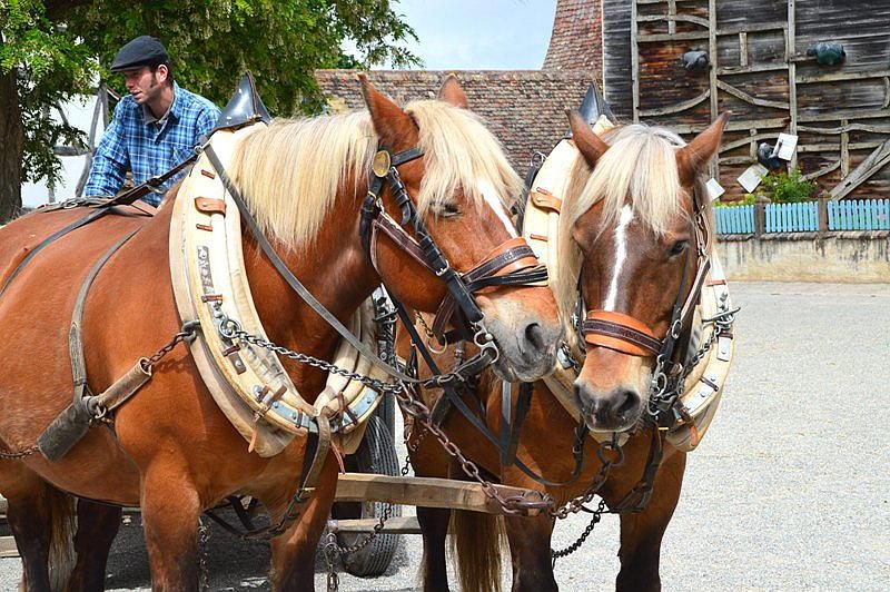 Ecomusee Pferdegespann