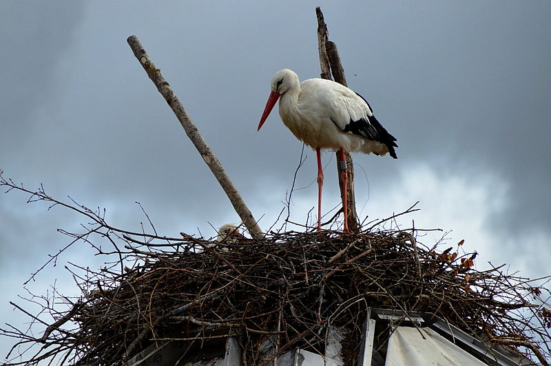 Ecomusee Storch
