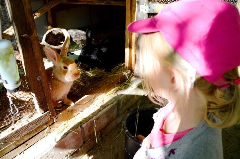 Berlin mit Kindern: Berlin Schöneiche Graetzhof Haustier