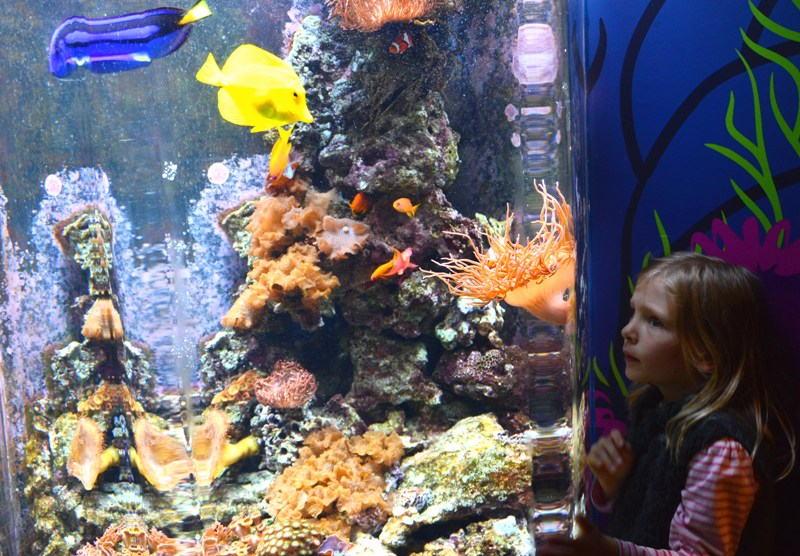 Berlin mit Kindern: Berlin Sea Life