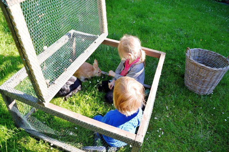 Haustier auf Probe - Hasenfütterung