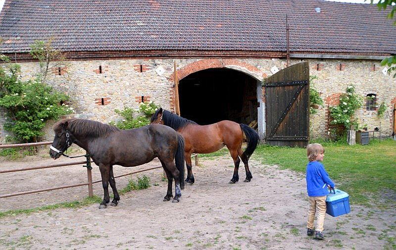 Haustier auf Probe: Pferde pflegen