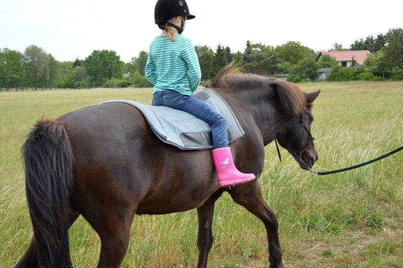 Haustier auf Probe: Pferde reiten.