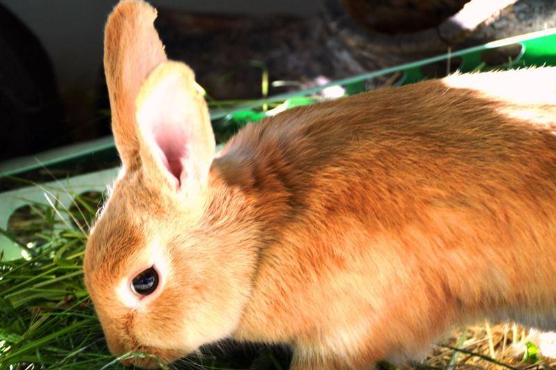 Haustier auf Probe: Hase Jonny