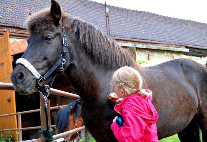 Haustier auf Probe: Pferdepflege