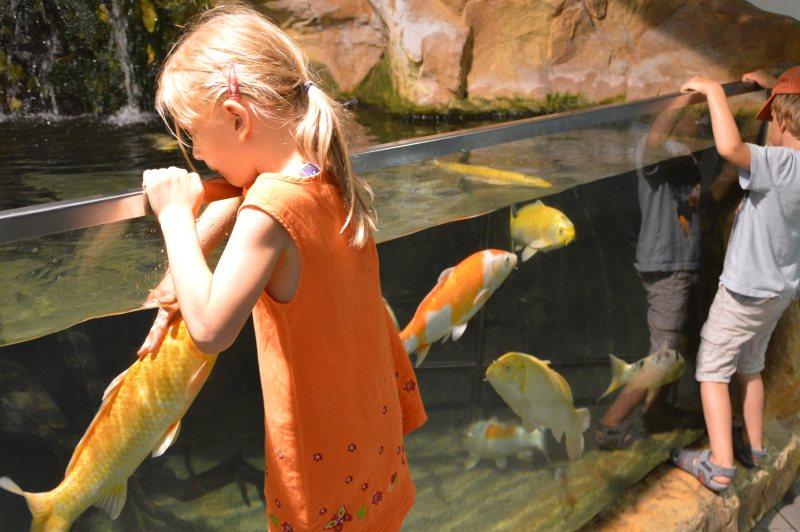 Wien mit Kindern Haus des Meeres