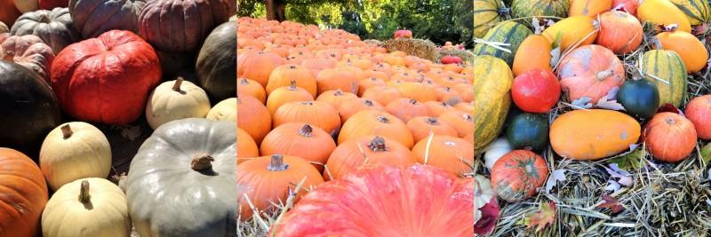 Herbst_Kuerbisse