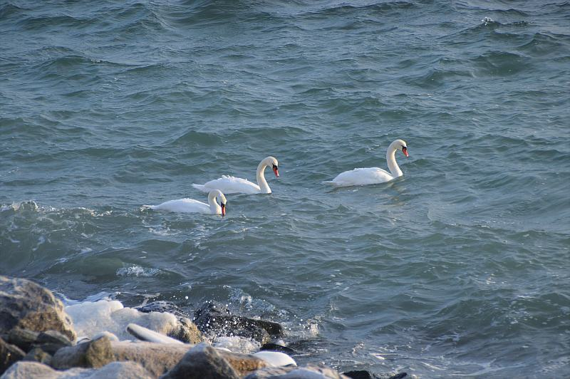 Ostsee im Winter_Boltenhagen_9_familyescapes
